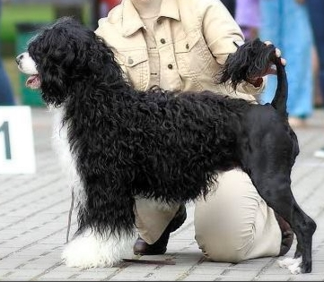 abadessans dancing freestyle pedigree